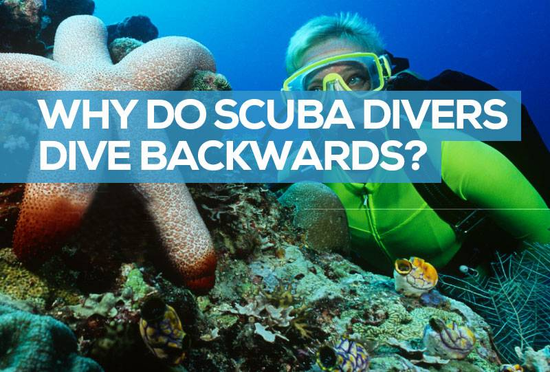 why do divers go in backwards