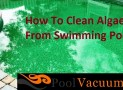 How To Clean Algae From Swimming Pool